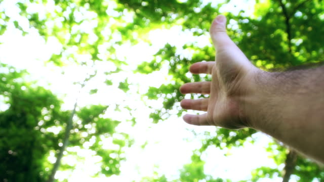 Human hand high up with nature