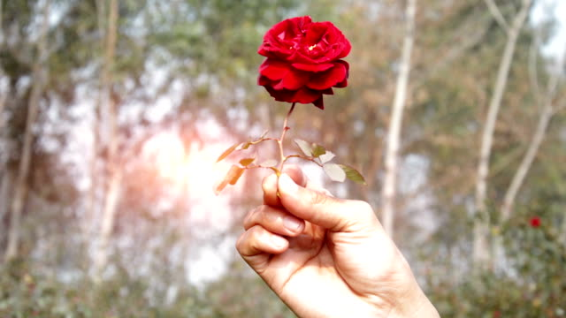 Human Hand Holding Rose in his Hand