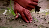 Human hand planting a seed