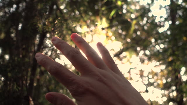 Human hand with sunlight
