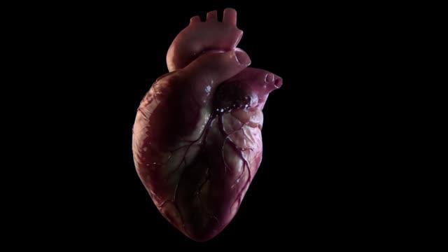 human heart beat