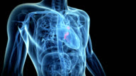 Human heart valves
