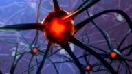 Männliche Gehirn