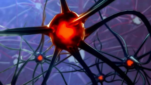Human Male Brain