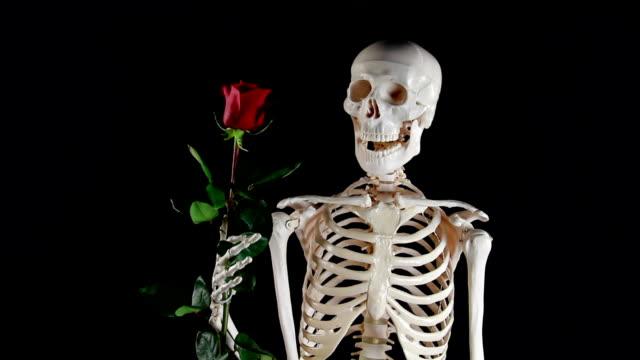 Human skeleton holding a rose