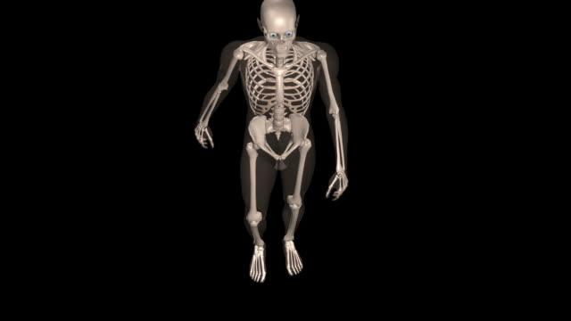 Human skeleton walking