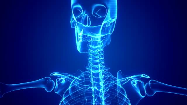 Human Skeleton X-ray Animation