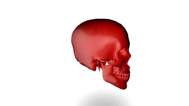 Human skull (loopable)