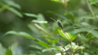 Hummingbird perched on twig branch in green forest,, static