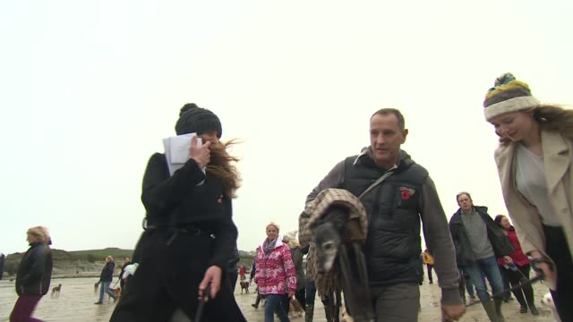 Hundreds join Walnut the whippet for his final dog walk in Cornwall ENGLAND Cornwall EXT Walnut the whippet in arms of owner Mark Woods Various of...