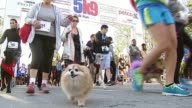 WGN Hundreds of dogs and their owners participated in the 5K9 Walk to raise money for Paws Chicago Participants And Their Dogs At Starting Line on...