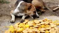 Hungry dog eating sweet food