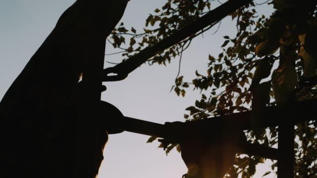 Ein Jäger klettert einen Baum stehen und wird in Position s die Sonne schön backlights seines Aufstiegs die Treppe hinauf in die Bäume.