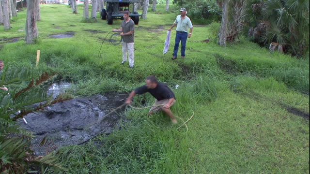 Hunters wrangle an alligator from a pond and drag it onto the banks.