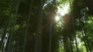 "Ibaraki Kairakuen Garden Pan shot of moso bamboo forest area of Kairakuen Garden which implies the Yin of ""Yin and yang"" of Kairakuen Garden Sun..."