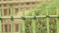 Tilt down shot of bamboo fences racking focus from the old bleached fence to the new vibrant green fence in the foreground