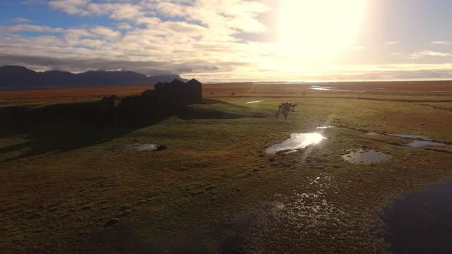 AERIAL Icelandic horses on the pasture