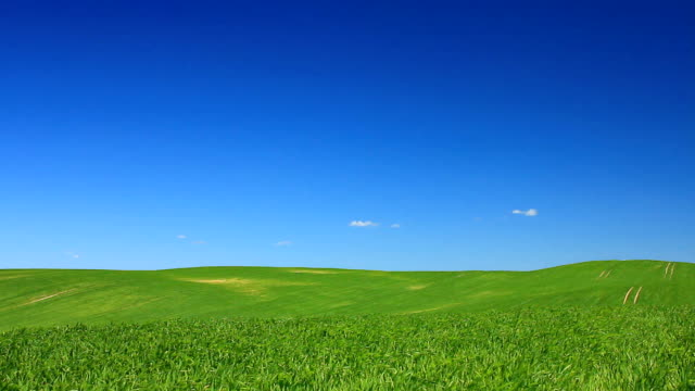 Idyll - green field and the blue sky