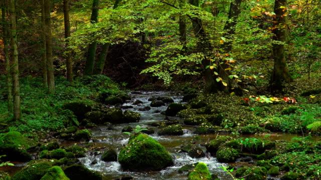 Idyllische herfst bos met Stream