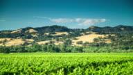 Idyllic Day in California Winery - T/L