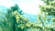 Idyllische Landschaft. Hügel mit Wald bedeckt. Fichte Ast im Vordergrund