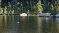 Idyllic wilderness lake, trout jumping, pine trees reflecting, Yosemite National Park, California