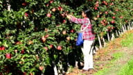 Immigrant Agricultural Labour Okanagan Valley