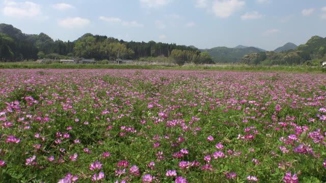Impressive scenes in Kagoshima