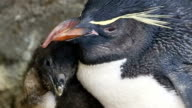 In a birth offering hope to a threatened species an aquarium here has succeeded in artificially breeding a southern rockhopper penguin for the first...