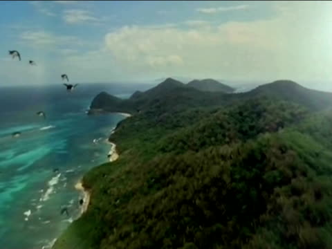 In a spoof Penguins fly and land in a South American tropical rain forest.