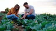 In gardening business
