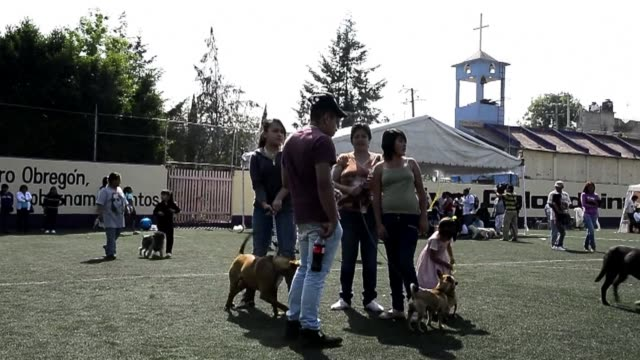In Mexico City an enormous sterilisation campaign is underway of the city's cats and dogs after a series of attacks by stray animals led city...