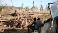 In southern Haiti trunks of uprooted trees still litter fields and beaches as if deadly Hurricane Matthew tore across the region leaving a trail of...