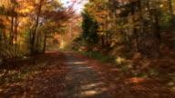 HD-ZEITRAFFER: In den Wald