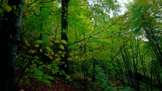 In the green thick forest