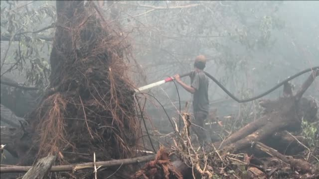 Indonesia fights forest and farm fires in the hard hit province of Riau which authorities declared a state of emergency this week with the blazes...