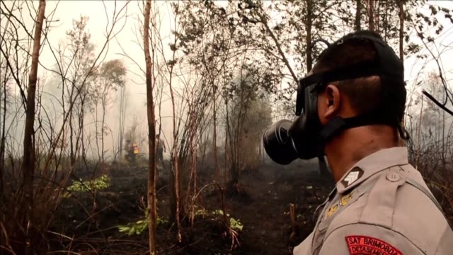 Indonesian firefighters extinguish fire on a vast burning peat land forest in Central Kalimantan province on Borneo island during President Joko...