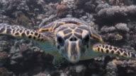 Inquisitive Turtle