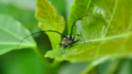 Insect on green leaf.