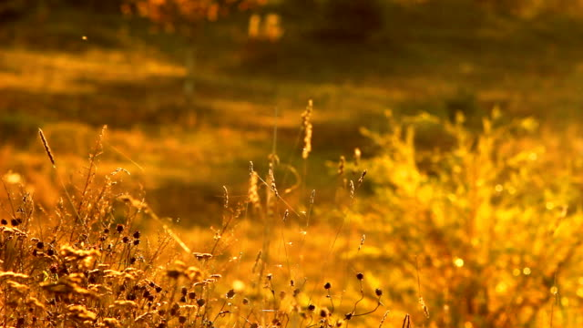 Insects on autumn meadow