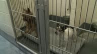 Inside Indianapolis Animal Care and Control 2 Small Dogs Barking In Kennel At Animal Control on October 09 2013 in Indianapolis Indiana