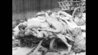 Inside the concentration camp / soldiers and former prisoners walking around / emaciated bodies on carts and piled on the ground / bodies being...