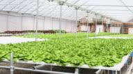 WS DS Interior of Hydroponic Lettuce Farm Greenhouse / Richmond, Virginia, United States