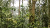 Interior of tropical rainforest, Ecuador,  during an afternoon shower with rain and mist