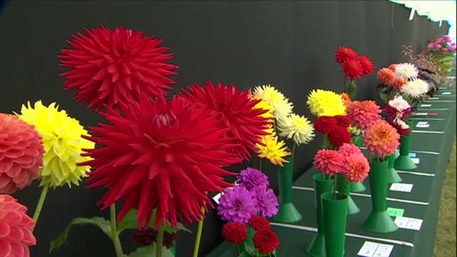 Interior shots of exhibits of cut flowers and floral arrangements on display in a marquee at Sandringham Flower Show>> on July 29 2015 in Sandringham...