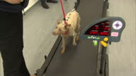 Interior shots Queen Elizabeth II being shown dog walking on treadmill with sensors on its body to measure movement on visit to the New School of...
