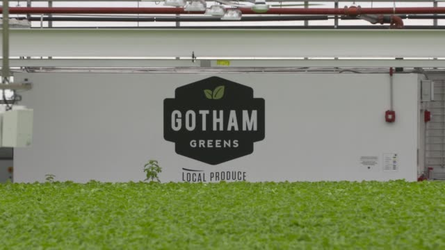 Interior signage of the Gotham Greens growing facility and packaged greens in Brooklyn NY on July 27 2017 Shots wide interior of facility with many...