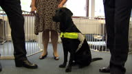 internal shots Jeremy Browne talk with workers at guide dog centre guide dogs in office Jeremy Browne Visiting Guide Dogs on August 06 2013 in London...