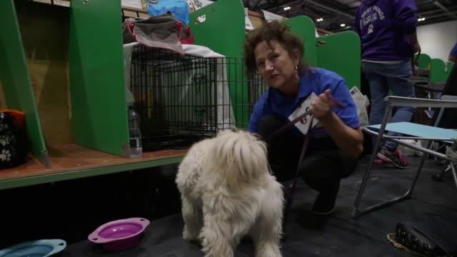 Interviews with Kennel Club Secretary Caroline Kisko Tibetan Terrier owner Donna Grant Retriever owner Caron Robson GVs at Eukanuba Discover Dogs show