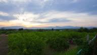 Inthanon Mountain range sunset